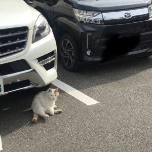 駐車場でにゃんこ発見(⋈◍>◡<◍)。✧♡