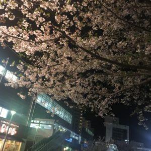 家の近くですが夜桜もいい感じ👍
